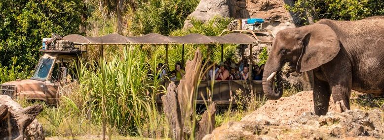 Disney Animal Kingdom Private Tour