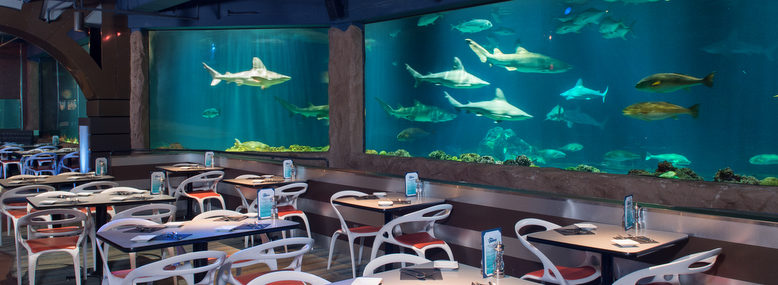 Seaworld Orlando Paring In Magical Dining Month Touring Central Florida