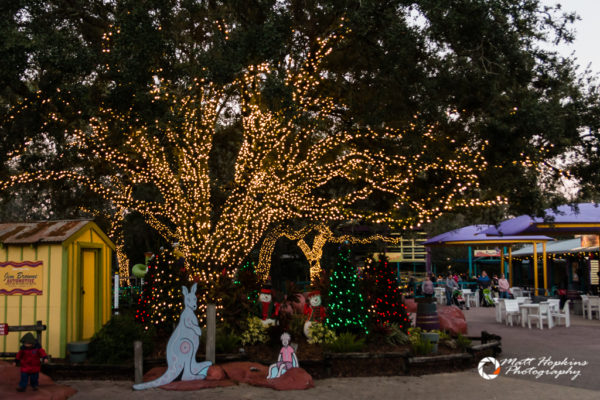 Lowry Park Zoo Christmas.Christmas In The Wild At Tampa S Lowry Park Zoo Touring