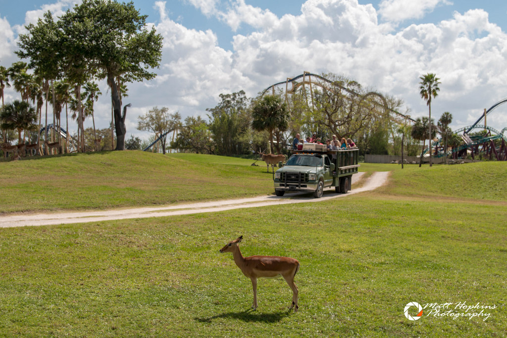 Busch Gardens Tampa 2018 Black Friday Sale Touring Central Florida