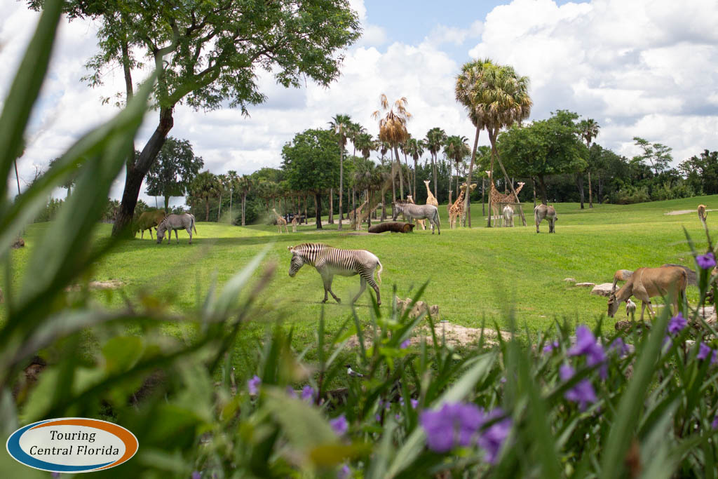 Busch Gardens Tampa News & Notes - July/August 2018 - Touring ...