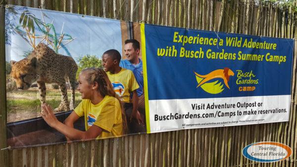 Busch Gardens Tampa News Notes July August 2018 009 600x338 - Busch Gardens Monthly Instant Rewards 2019